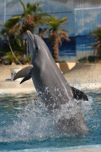 delfin