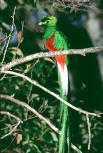 quetzal